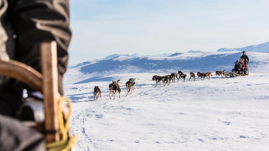 Riksgransen mostrando paseo en trineo de perros y nieve