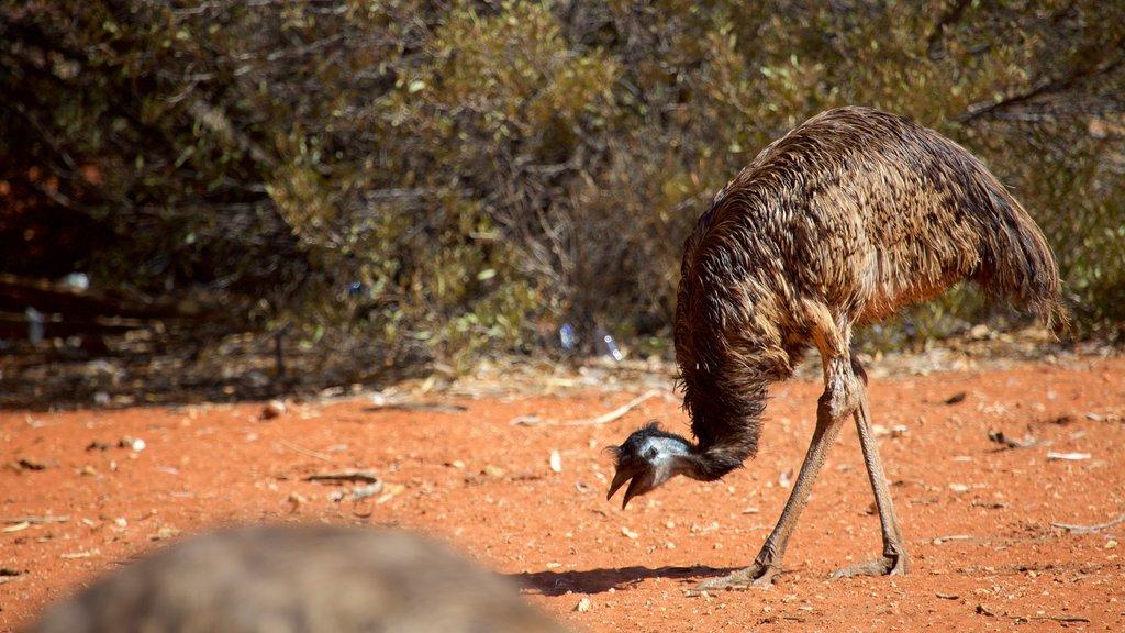 Uluru que incluye vida de las aves y animales terrestres