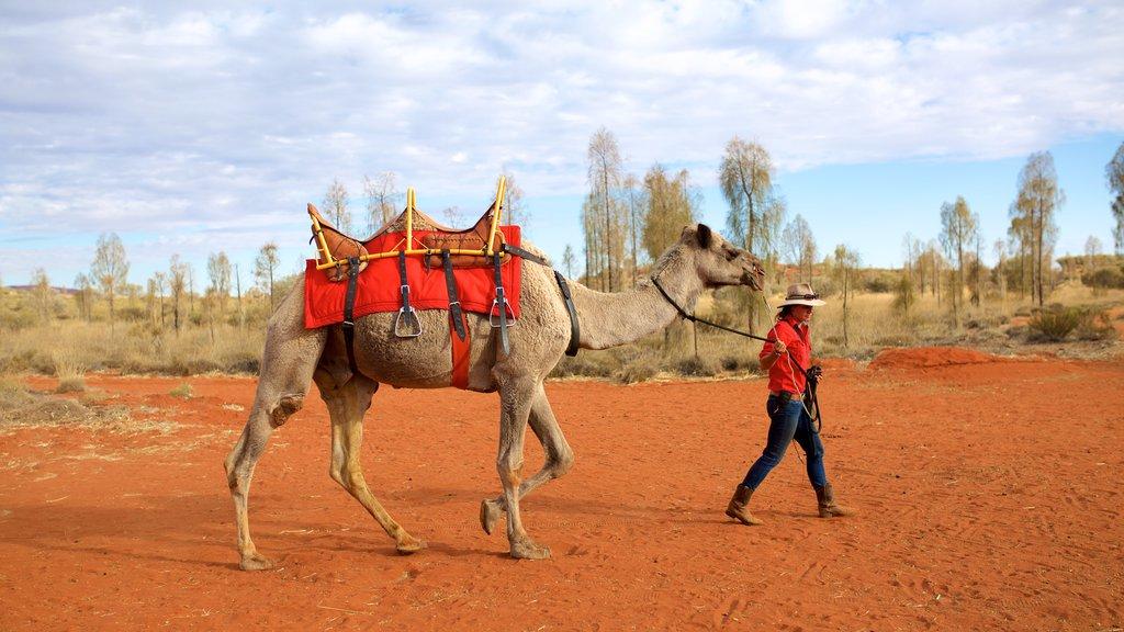 Uluru que incluye escenas tranquilas y animales terrestres y también un hombre