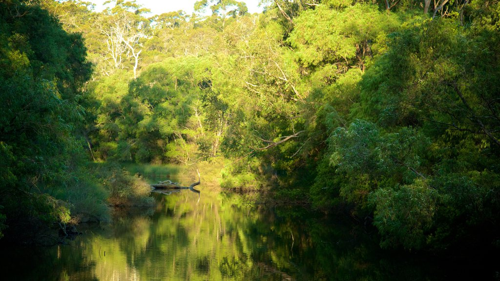 Margaret River featuring forest scenes and a river or creek