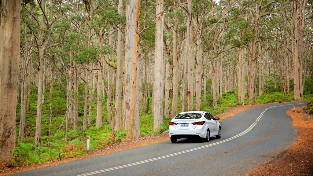 Boranup featuring forest scenes and street scenes