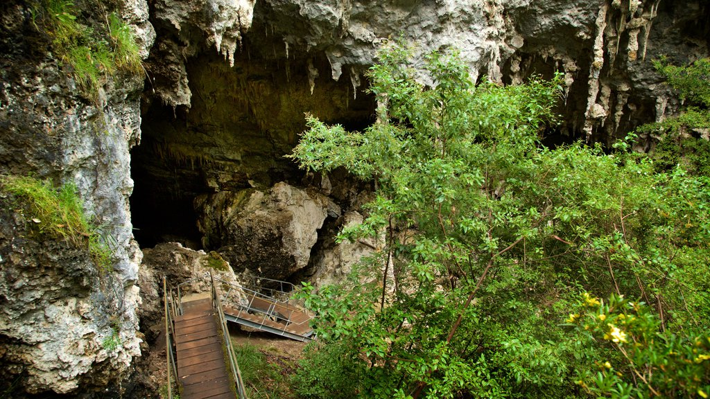 Mammoth Cave which includes caves and forest scenes