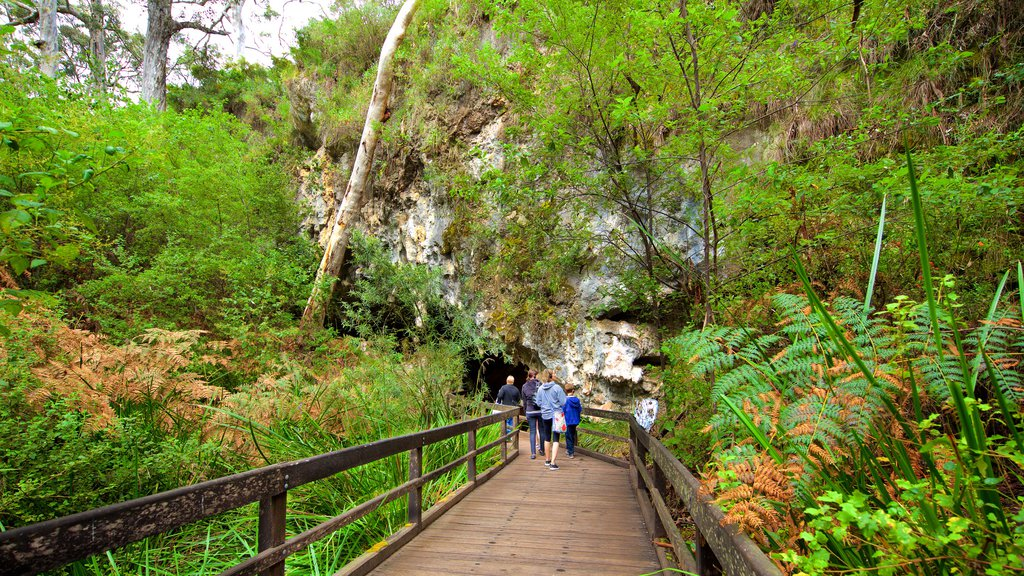 Mammoth Cave featuring forest scenes and wildflowers