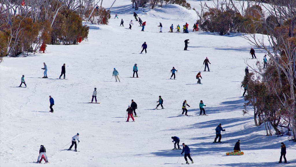 Thredbo showing mountains, snow boarding and snow