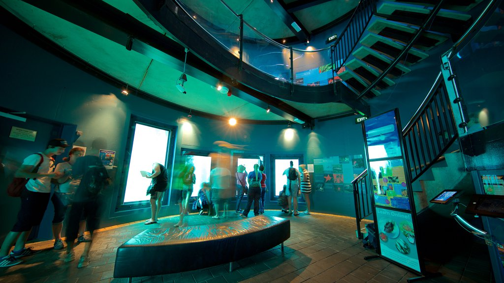 Busselton Jetty Underwater Observatory showing interior views and marine life as well as a small group of people