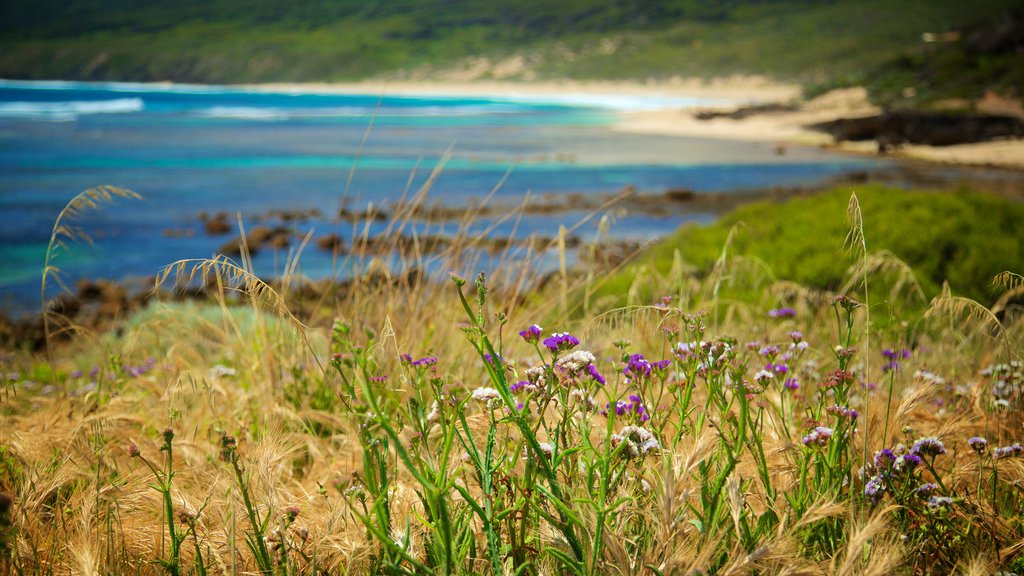 Yallingup which includes wildflowers and a sandy beach