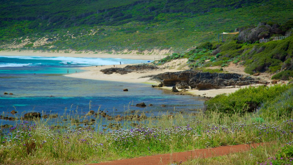 Yallingup showing a beach, rugged coastline and flowers