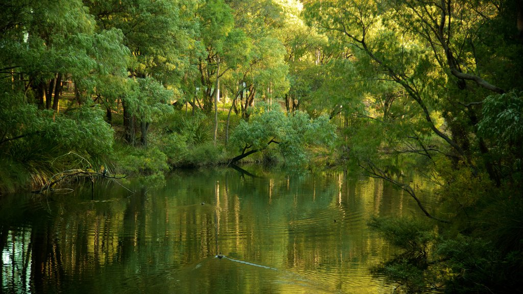 Margaret River featuring forests and a river or creek