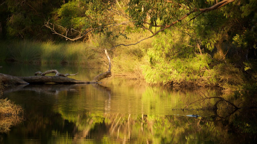 Margaret River showing a river or creek and forest scenes