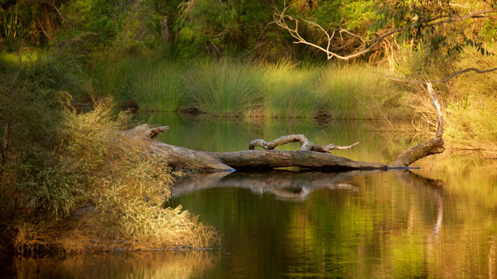 Margaret River which includes a river or creek and forest scenes
