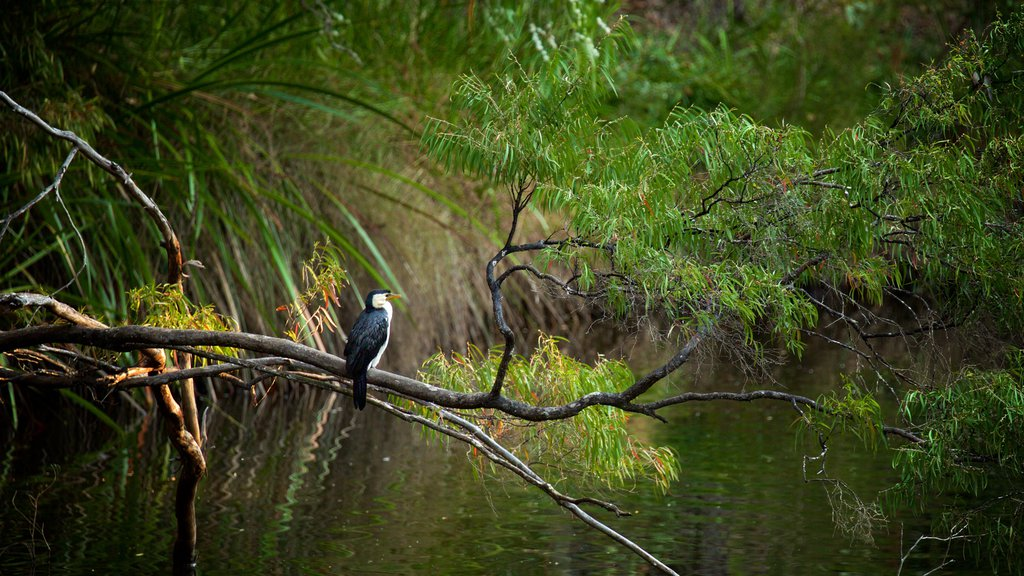 Margaret River featuring a river or creek, bird life and forests
