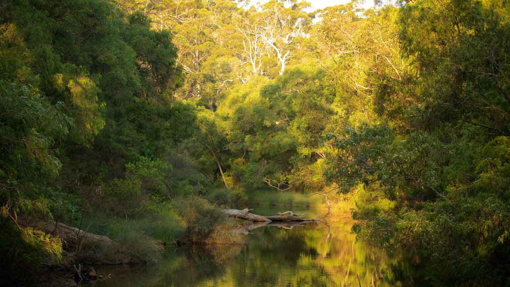 Margaret River featuring a river or creek and forest scenes