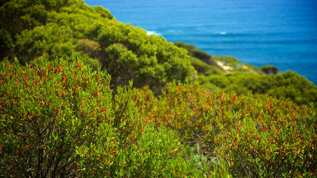 Cape Naturaliste Lighthouse featuring general coastal views and wildflowers