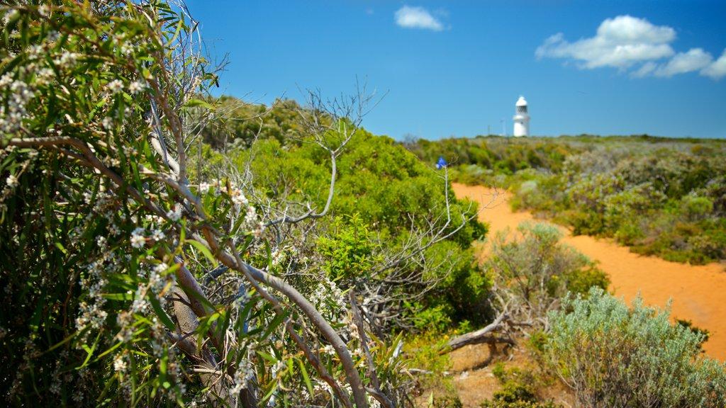 Cape Naturaliste Lighthouse mostrando un faro y flores silvestres