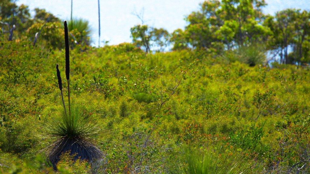 Naturaliste showing wildflowers and general coastal views