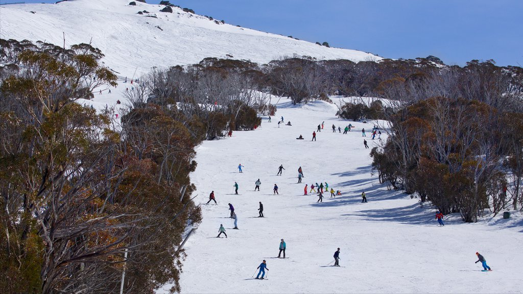 Thredbo featuring snow as well as a large group of people