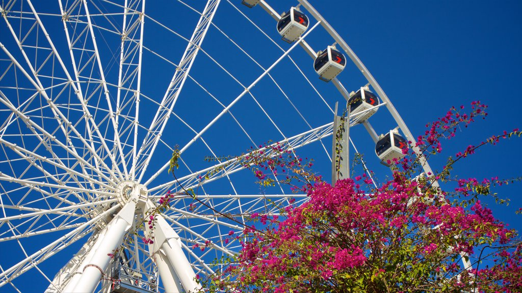 Wheel of Brisbane showing flowers and modern architecture