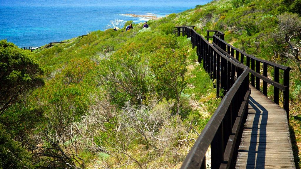 Cape Naturaliste Lighthouse showing general coastal views