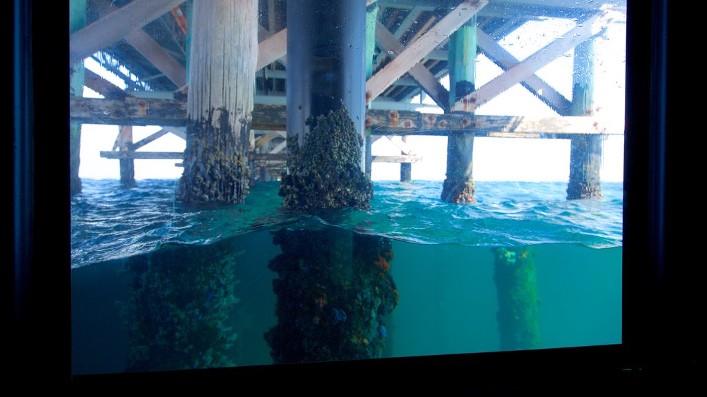 Busselton Jetty Underwater Observatory which includes general coastal views