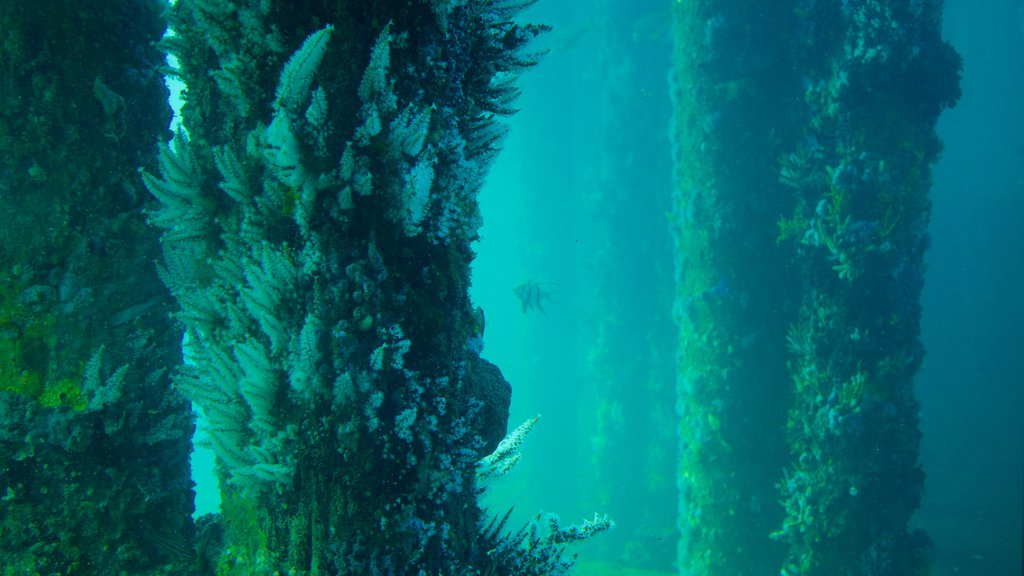 Busselton Jetty Underwater Observatory which includes marine life