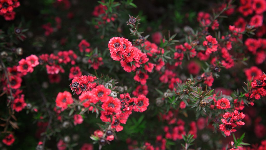 Amaze\'n Margaret River which includes flowers
