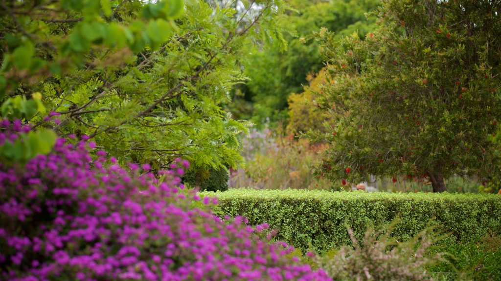 Amaze\'n Margaret River showing a garden and wildflowers