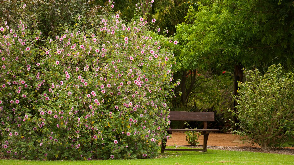 Amaze\'n Margaret River which includes a park and flowers