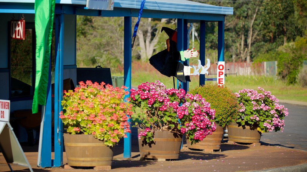 Margaret River Wine Region featuring flowers and a small town or village