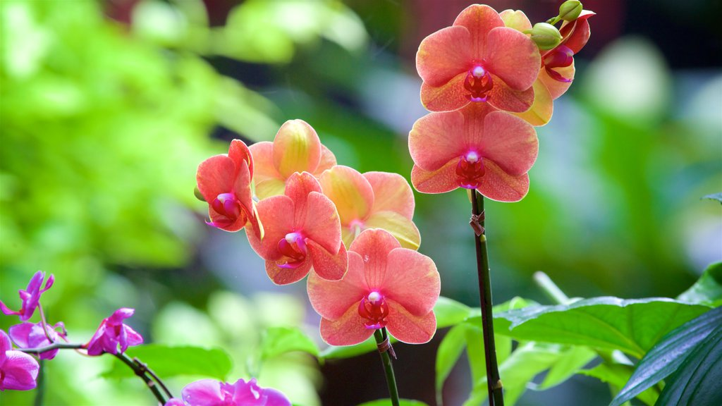 Queen Elizabeth Park featuring wildflowers