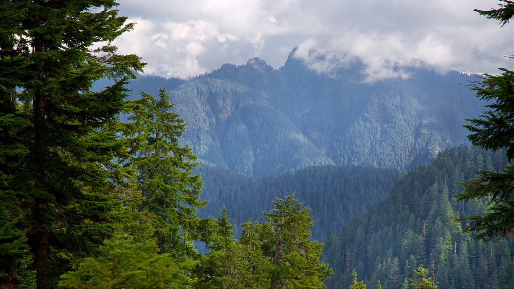 Grouse Mountain which includes forest scenes and mountains