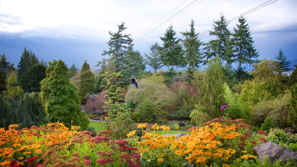 Queen Elizabeth Park showing a garden