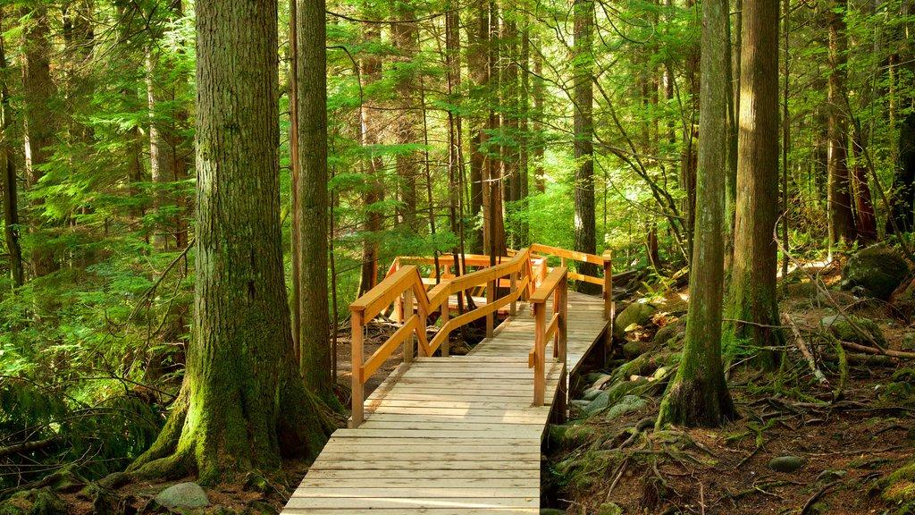 Parque Lynn Canyon que incluye escenas forestales