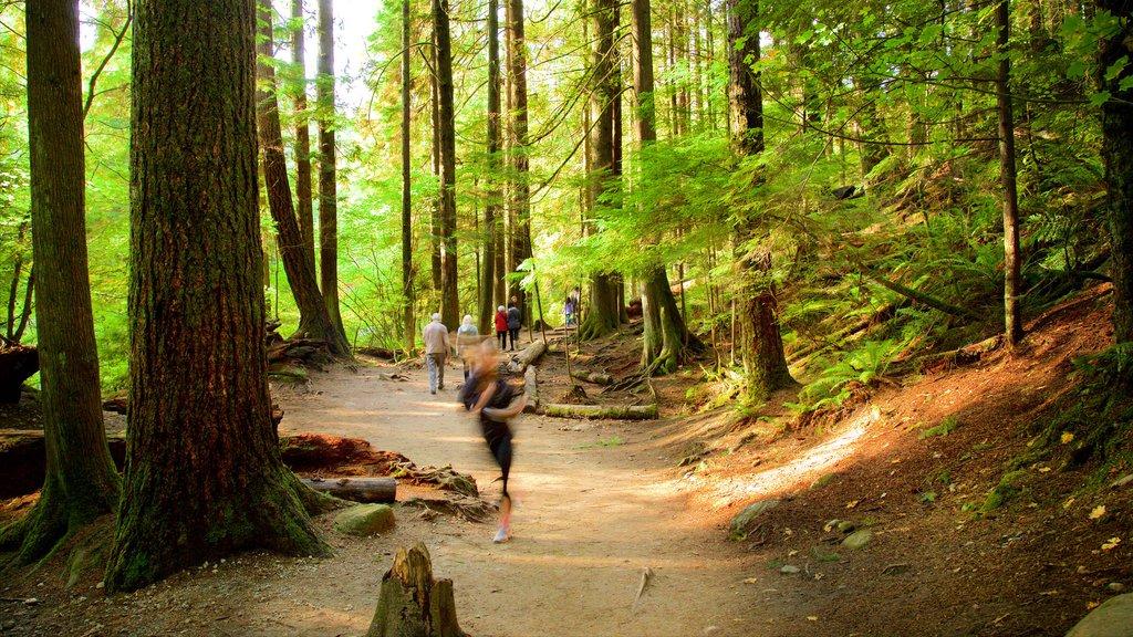 Parque Lynn Canyon ofreciendo escenas forestales y también un pequeño grupo de personas