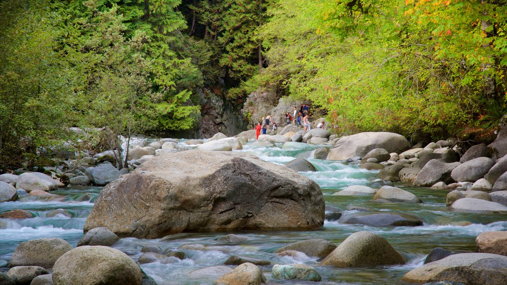 Parque Lynn Canyon que incluye bosques y un río o arroyo