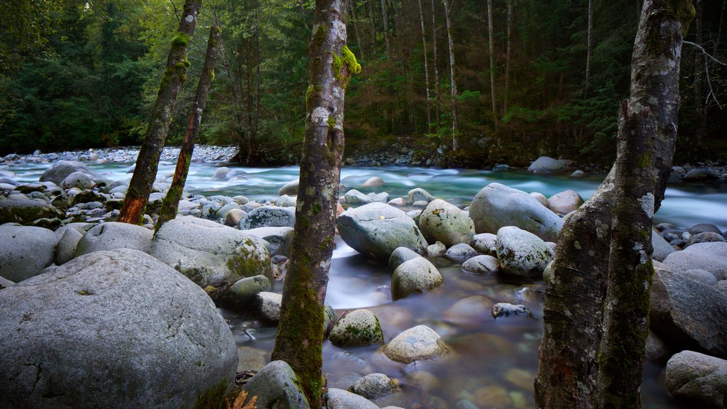 Lynn Canyon Park which includes a river or creek and forest scenes