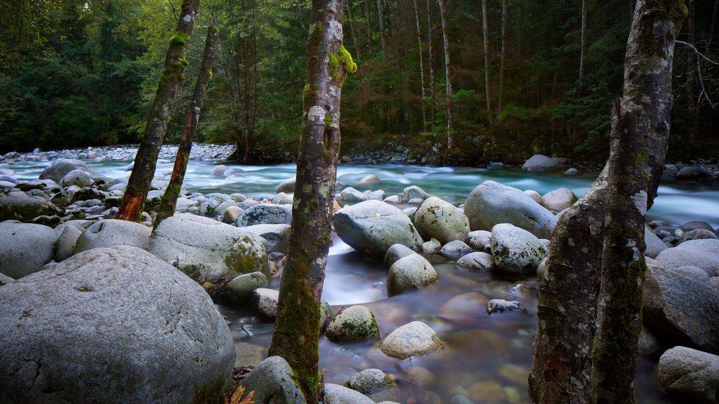 Parque Lynn Canyon mostrando escenas forestales y un río o arroyo