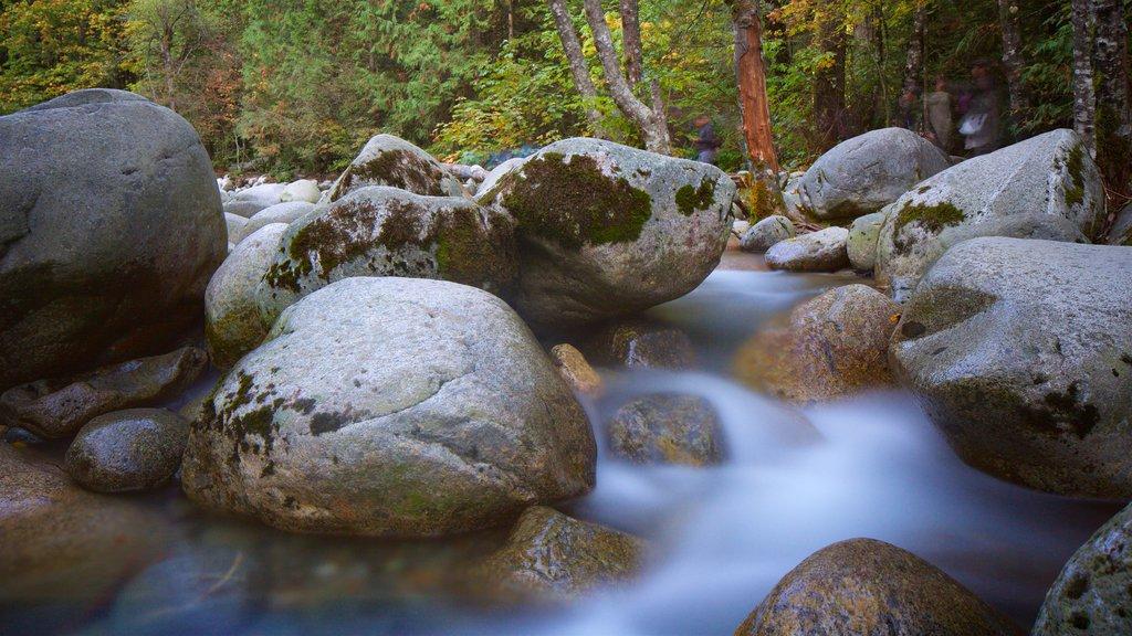 Parque Lynn Canyon mostrando un río o arroyo y escenas forestales