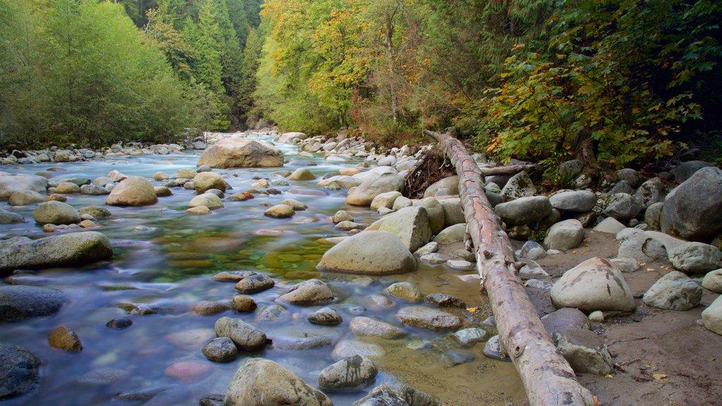 Parque Lynn Canyon mostrando un río o arroyo y bosques