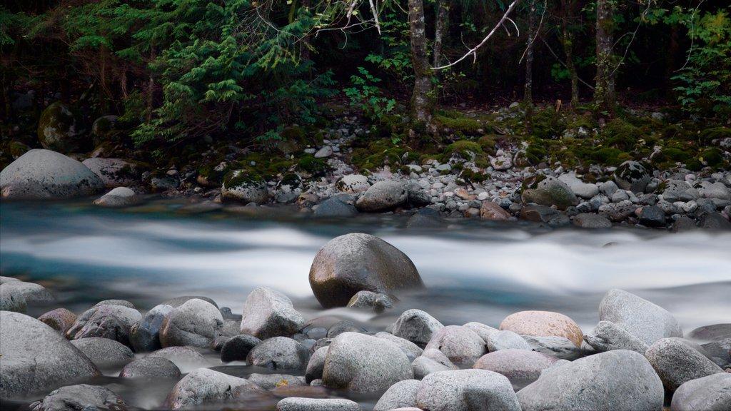 Parque Lynn Canyon ofreciendo un río o arroyo y escenas forestales
