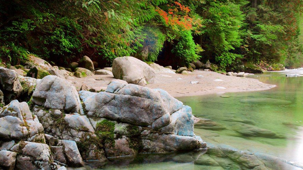 Parque Lynn Canyon que incluye un río o arroyo y bosques