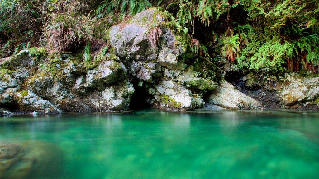 Parque Lynn Canyon que incluye escenas forestales y un río o arroyo
