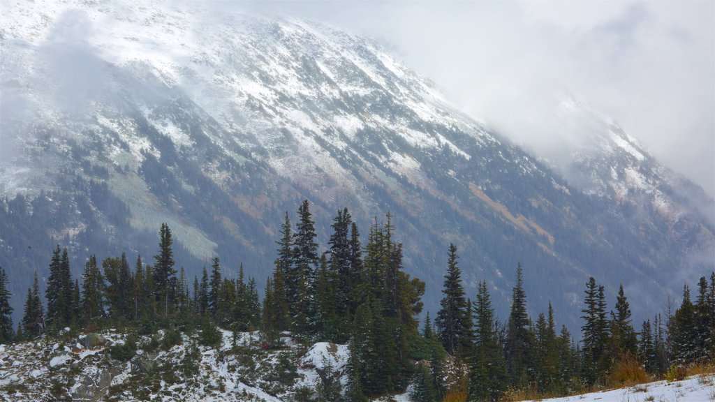 Whistler Blackcomb Ski Resort showing snow, mountains and forest scenes
