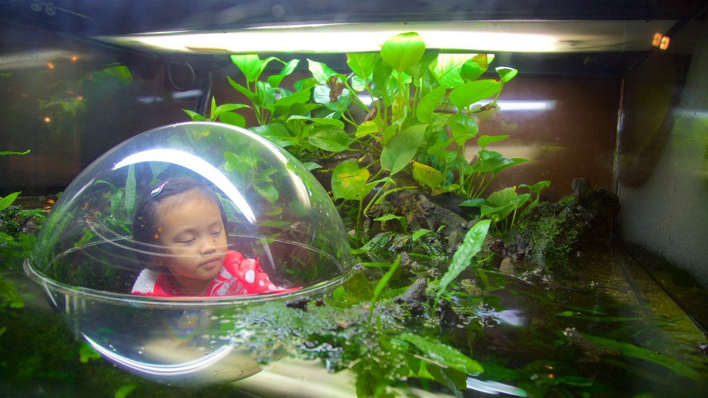 Vancouver Aquarium which includes animals, marine life and a pond