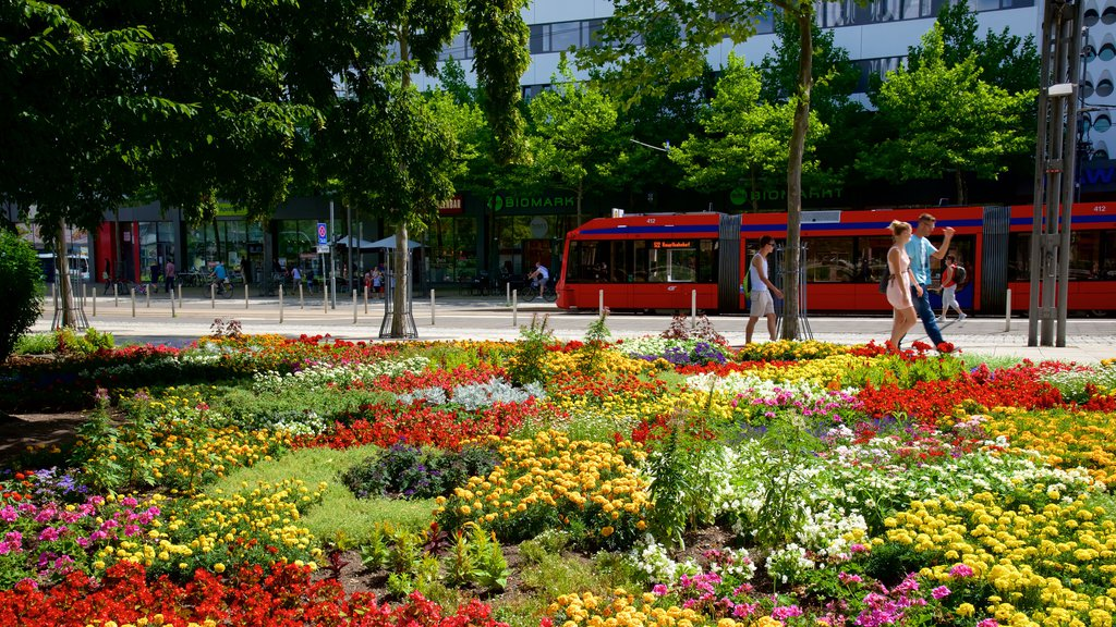 Chemnitz featuring a square or plaza and flowers