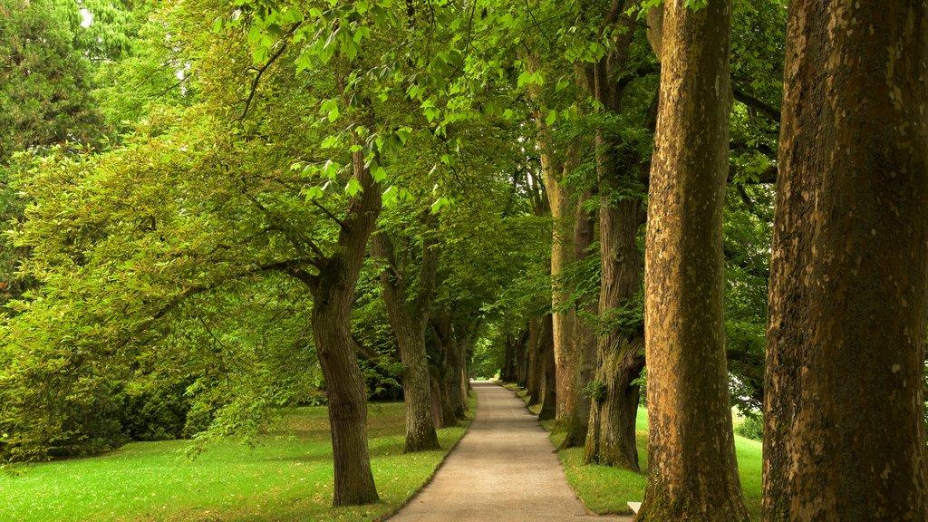 Lake Constance Promenade which includes a garden
