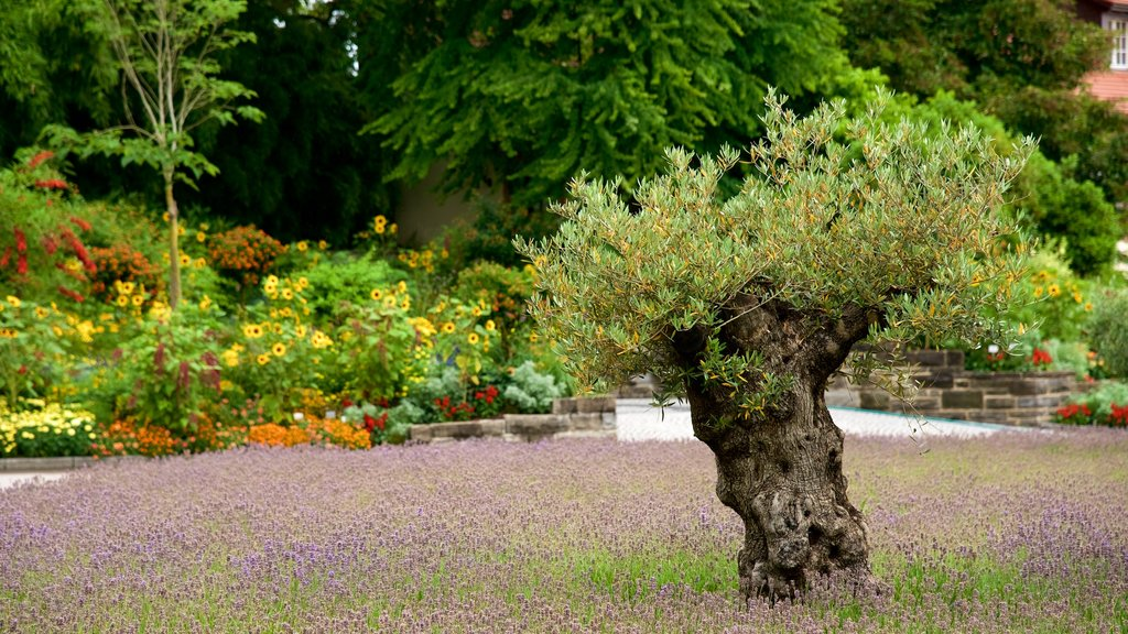 Lake Constance Promenade which includes a garden, wildflowers and flowers