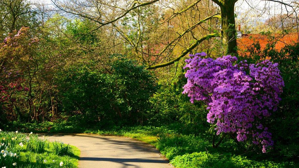 Roundhay Park mostrando un parque y flores
