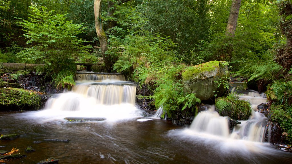 Rivelin Valley Nature Trail which includes forests and a river or creek