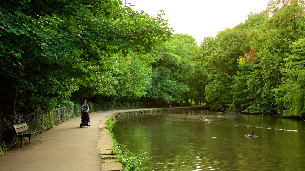 Endcliffe Park showing a lake or waterhole and a garden as well as an individual femail