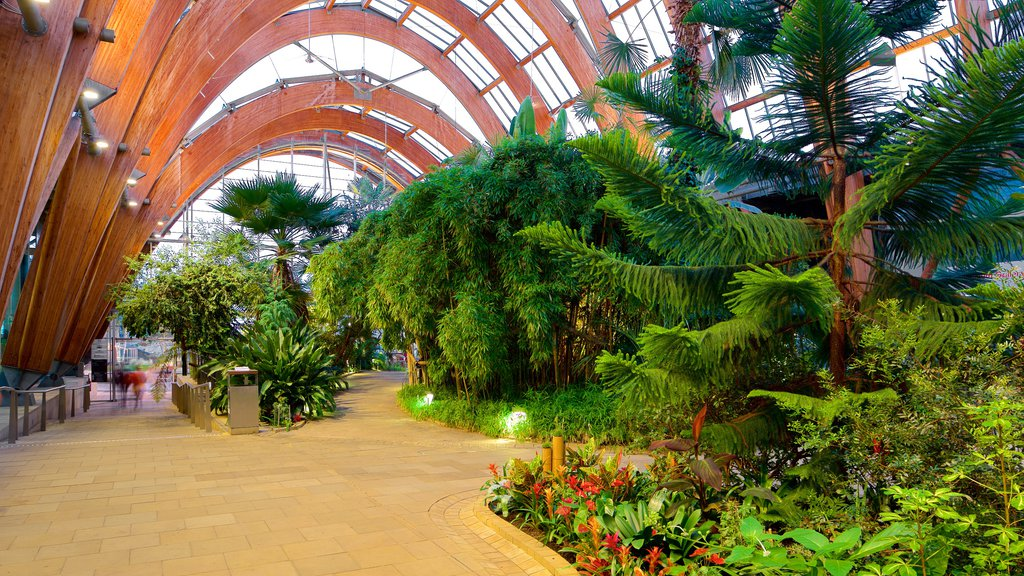Sheffield Winter Garden showing interior views and a park